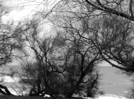 foto arbores